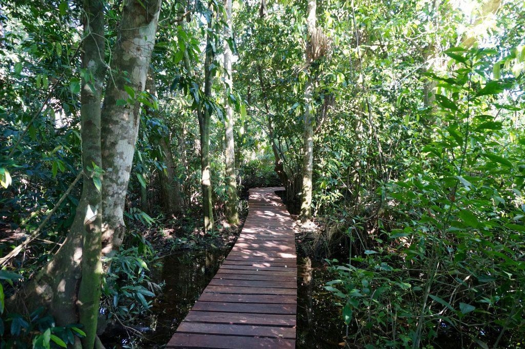 Canan-Ha boardwalk trail across Sian Ka'an wetlands jungle