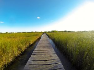 Boardwalk through the sawgrass at Sian Ka'an Biosphere Preserve.
