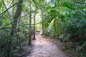 Tikal hiking trails
