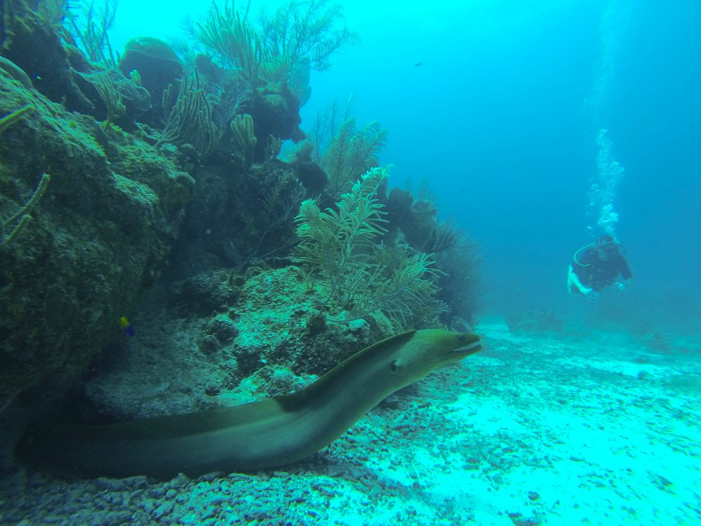 Eel Scuba Diving Belize