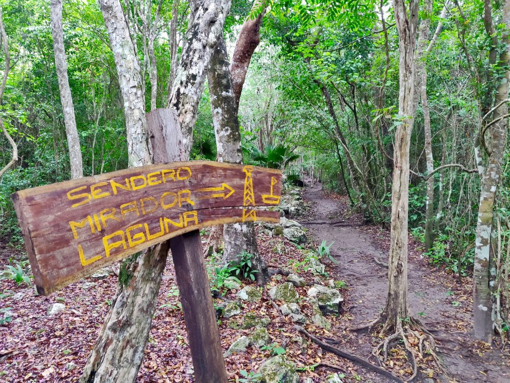 This sacbe, or trail, is the path from Muyil to Sian Ka'an lagoon and mirador (lookout)