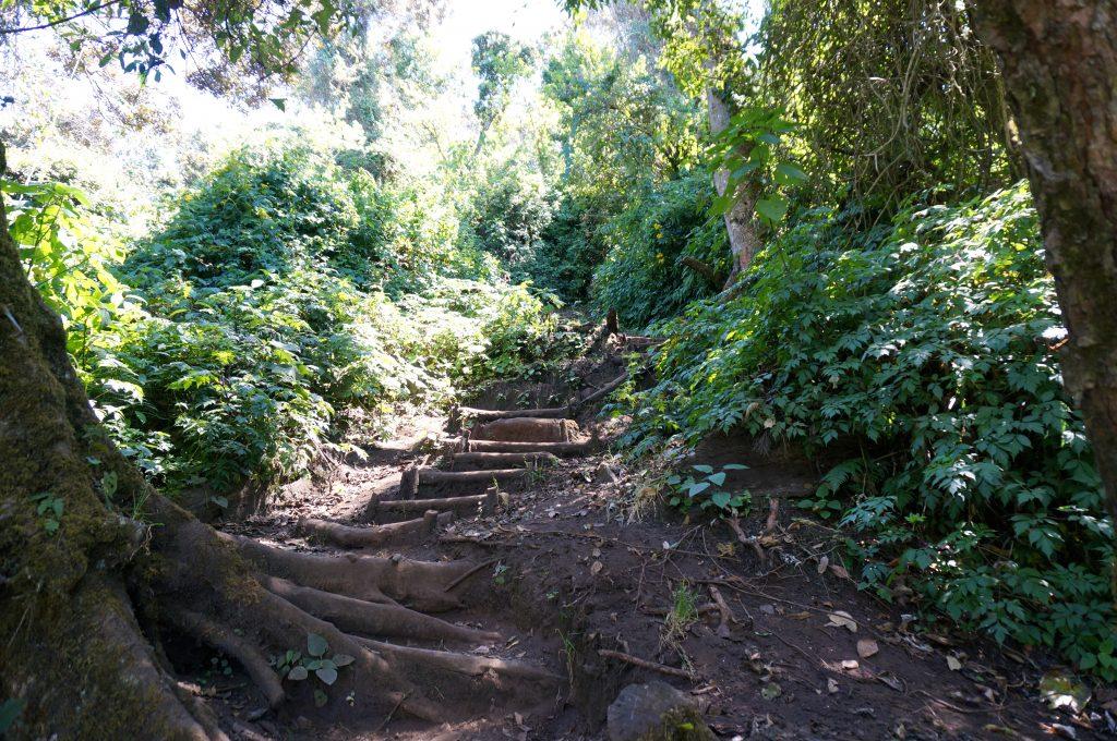 Volcan San Pedro trail