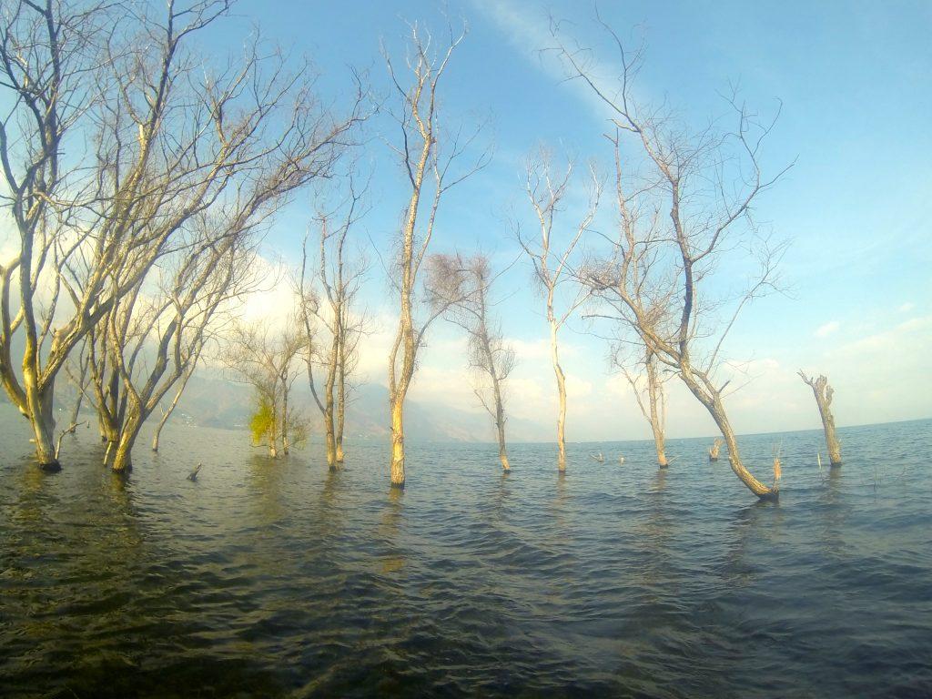 San Pedro La Laguna forest in the lake water