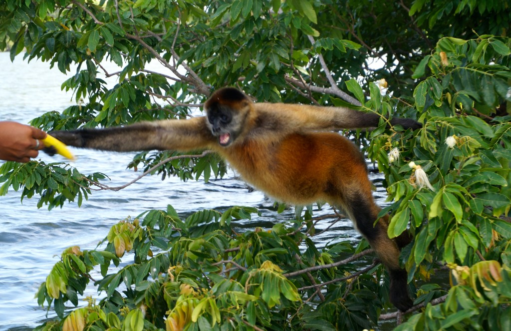Monkey Island Isletas Granada Nicaragua
