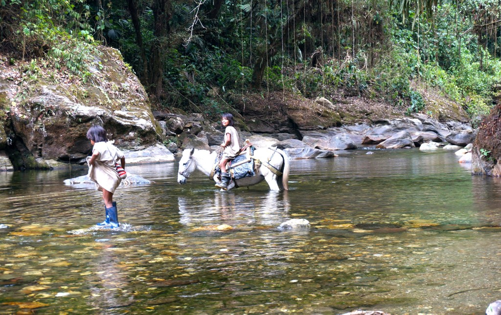 Indigenous Wiwa indians crossing river on horse Ciudad Perdida