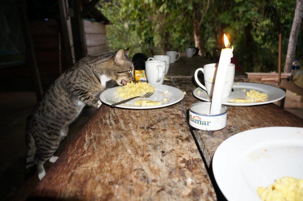 cat eating leftover food at camp during Ciudad Perdida trek