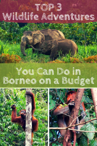 Our top 3 best wildlife adventures in Malaysian Borneo on a budget: Orangutans of Semenggoh Wildlife Centre, Bako National Park, & Kinabatangan River boat!