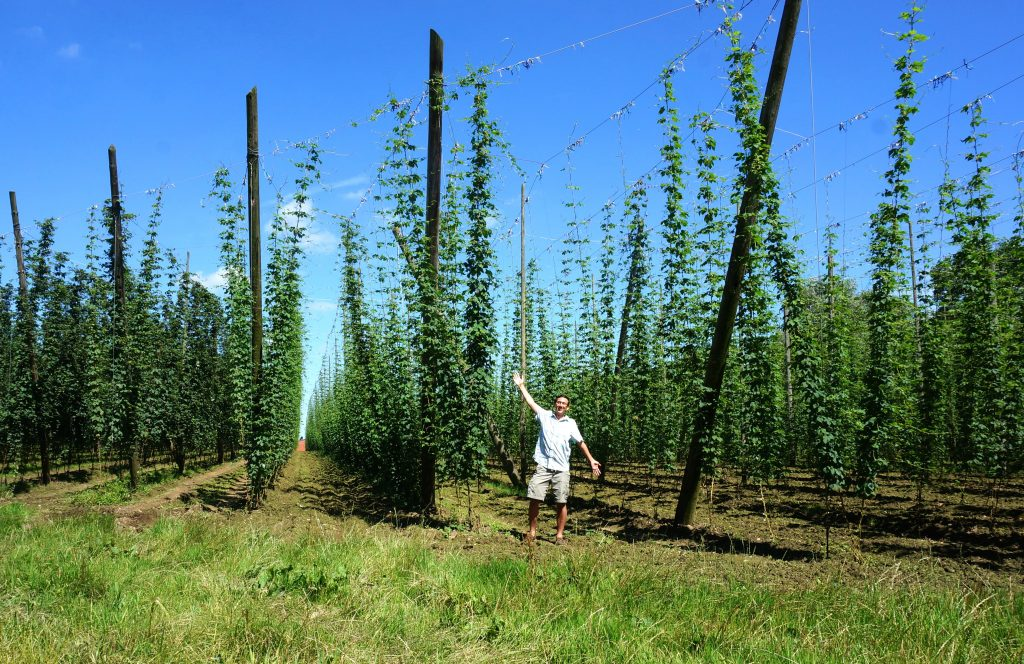 This is what hop fields look like!