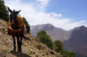 Trekking Around the Atlas Mountains of Imlil, Morocco