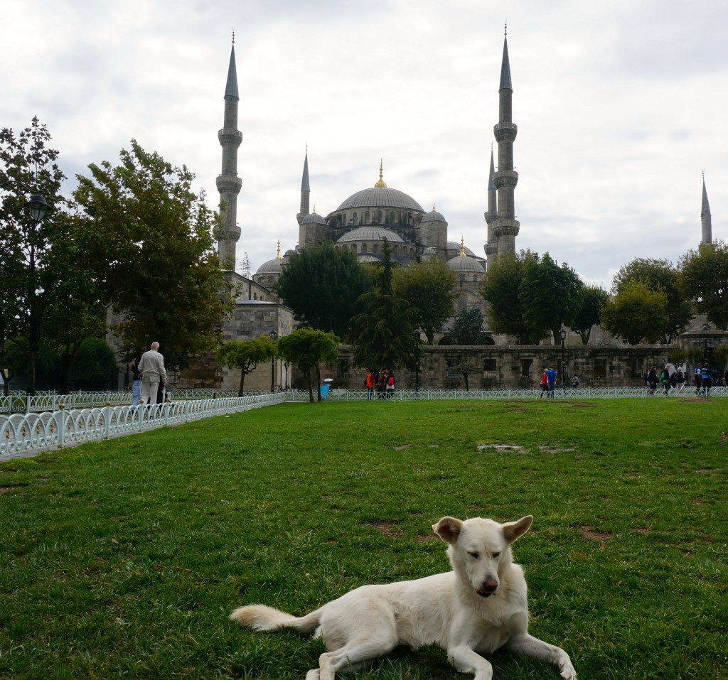 Blue Mosque with dog