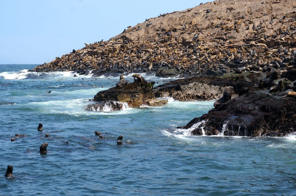 Palomino Island covered with sea lions