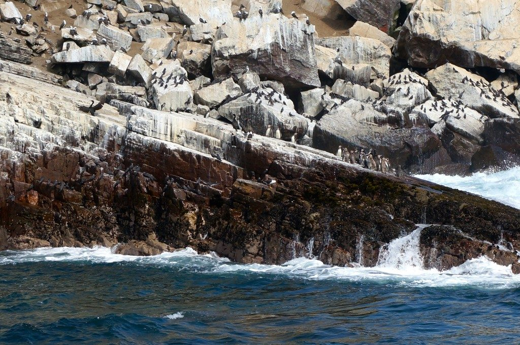 Penguins and other sea birds on San Lorenzo
