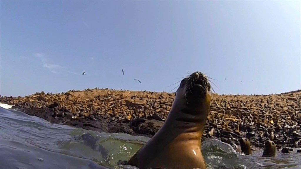 sea lion playing in front of Palomino island