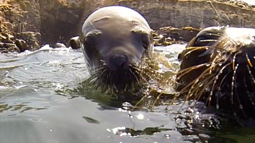 two sea lion pups up close at Palomino Island