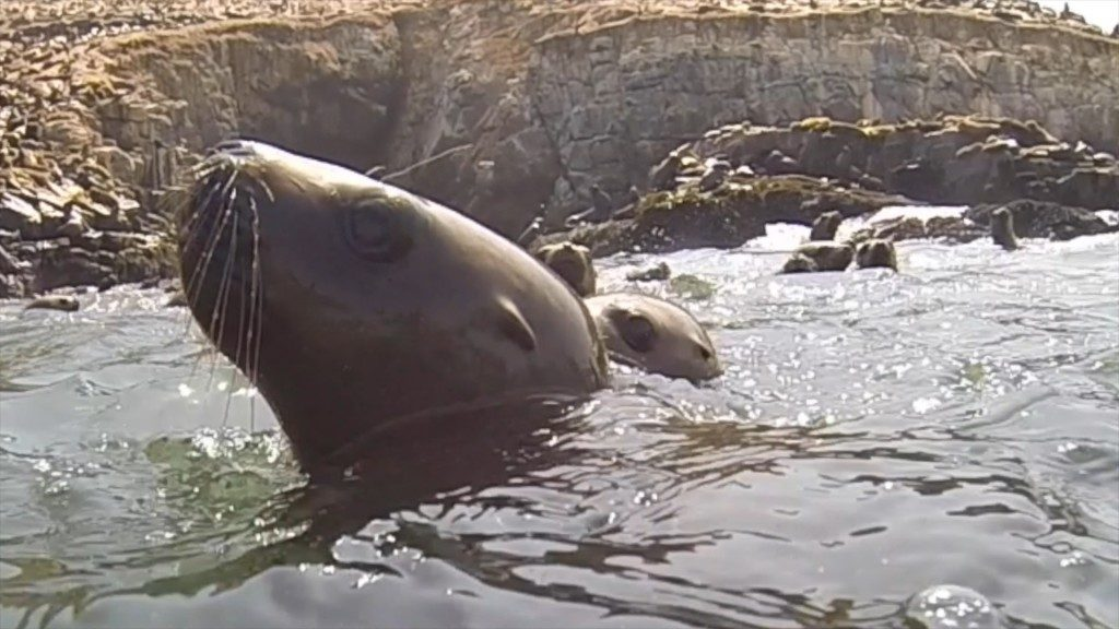 sea lion pup palomino island