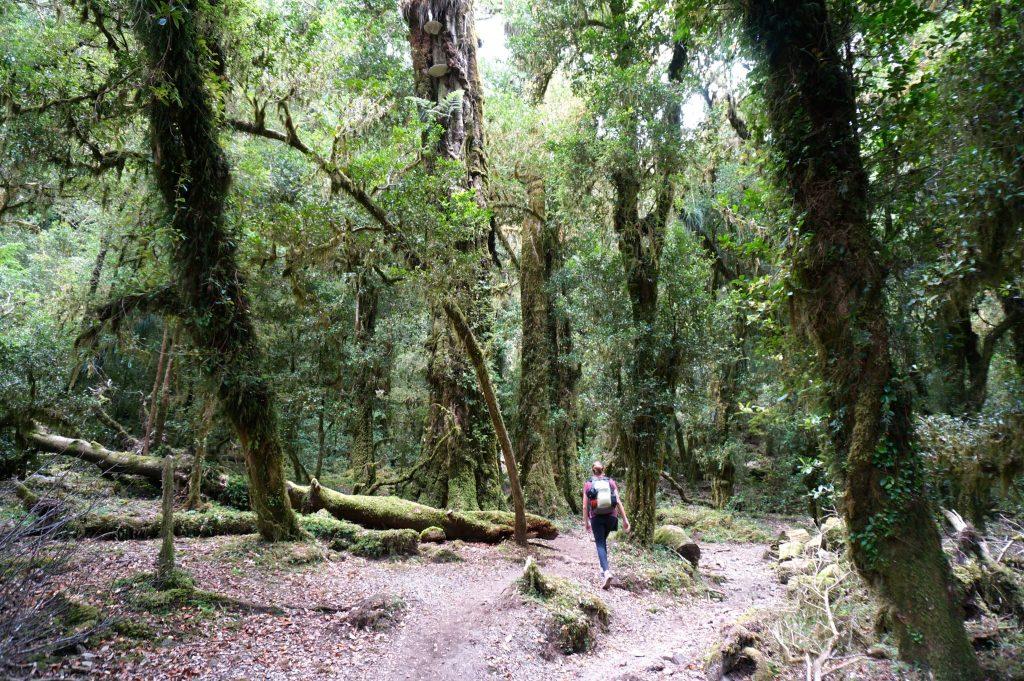 Trail to Cochamo Valley