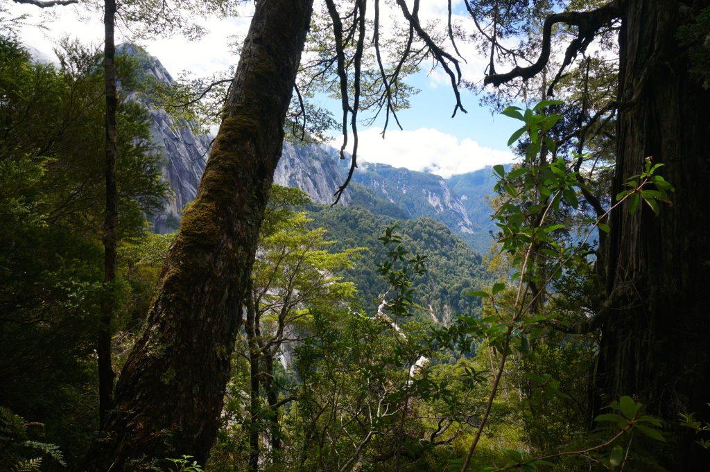 Cochamo Valley view through the trees