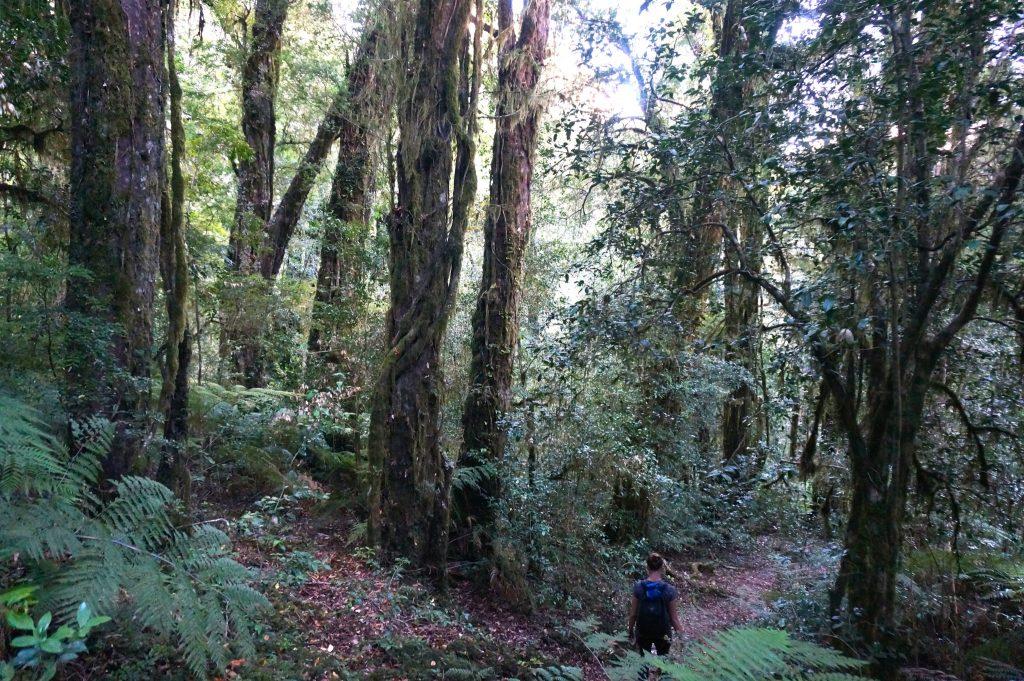 Arco Iris Trail
