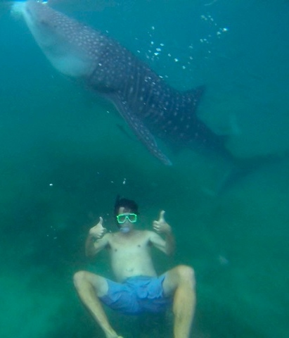 Man giving thumbs up sign while swimming with whale shark in oslob