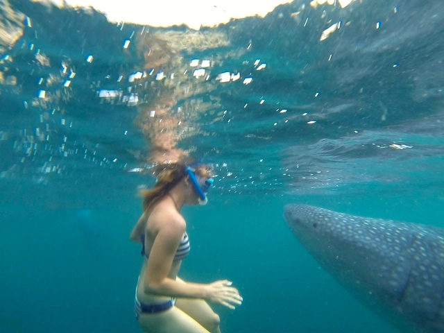 Heather swimming with whale sharks in Oslob Philippines