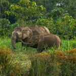 Top 3 Wildlife Adventures You Can Do in Borneo on a Budget