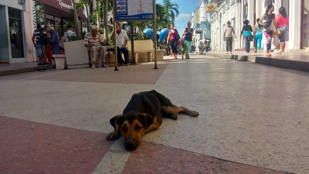 Street dog resting in Cienfuegos Cuba