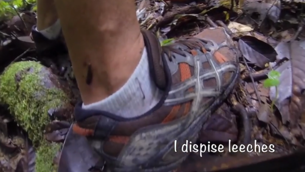 leeches on leg and shoe in Borneo