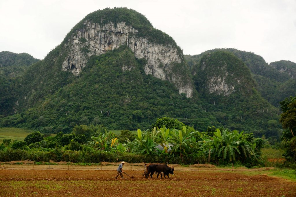 Magotes in the valle de vinales cuba
