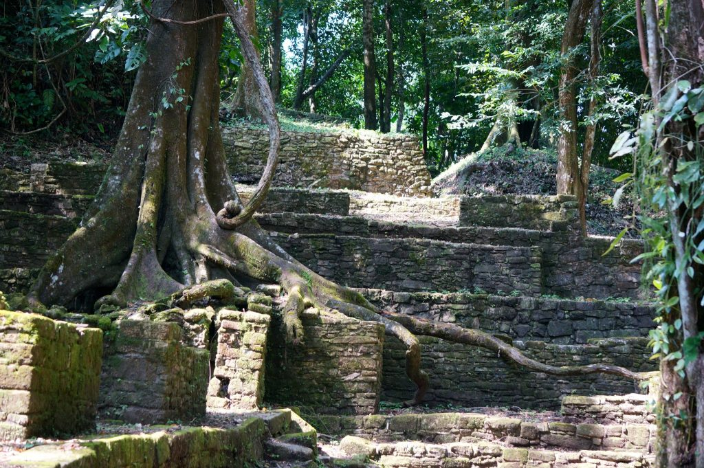 tree roots covering Grupo I ruins at Palenque Mexico