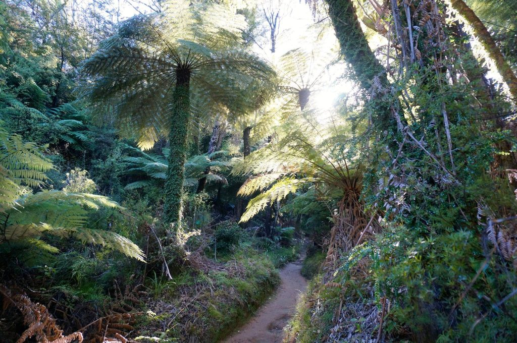 Abel Tasman Track trail through the forest