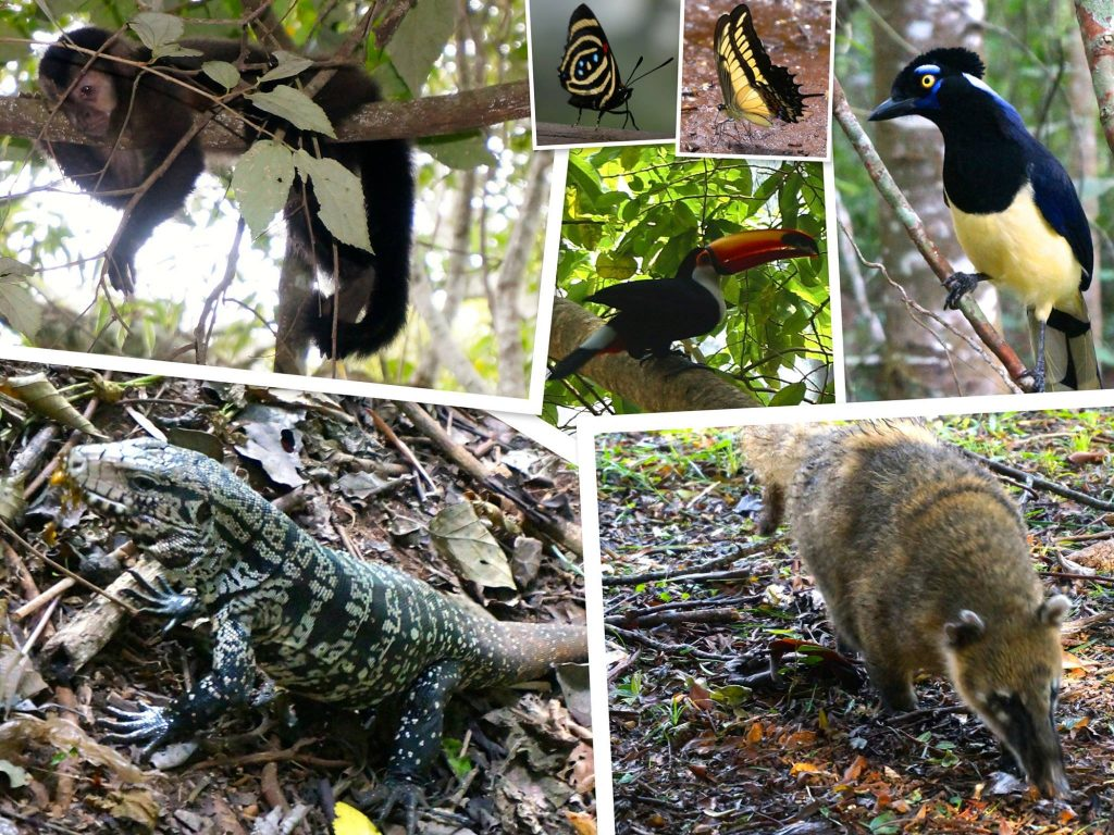 The variety of wildlife at Iguazu Falls: monkey, toucan, butterflies, coatis, lizards and more