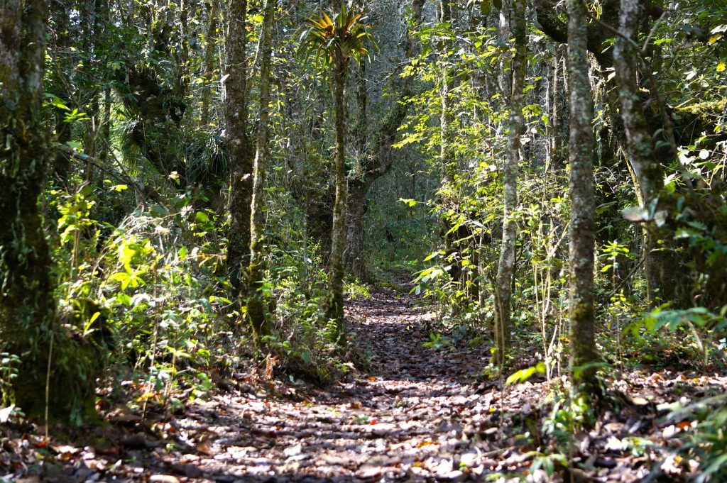 Huitepec Ecological Reserve is a nice hike in San Cristobal de las Casas