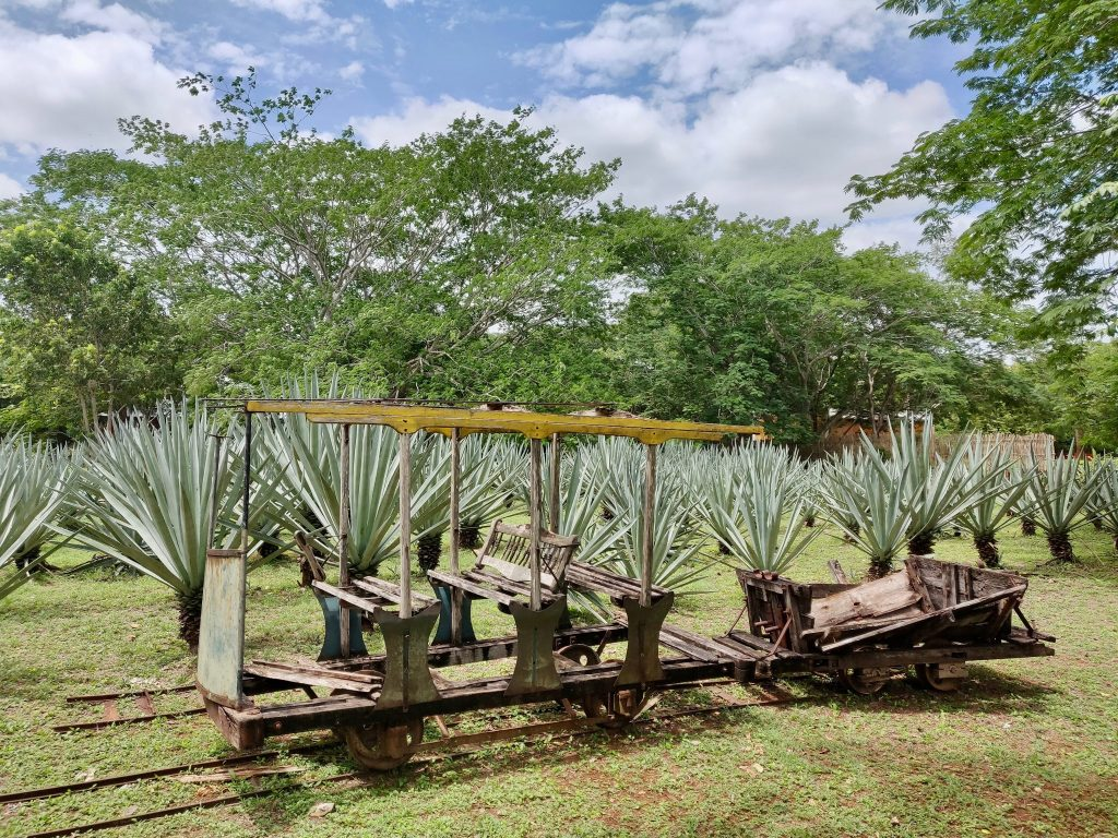 Hacienda San Pedro Ochil cart with henequén plants