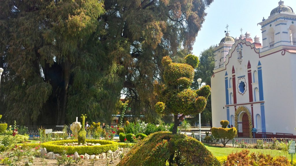 The Santa Maria del Tule church sits in front of the arbor del tule which is the widest tree in the world