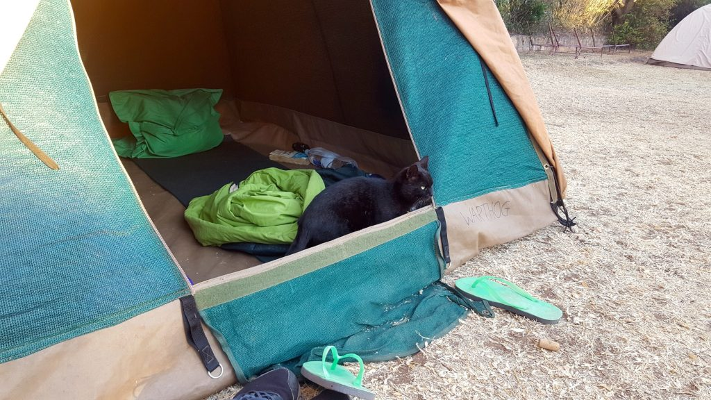 Cat in a tent in Zimbabwe