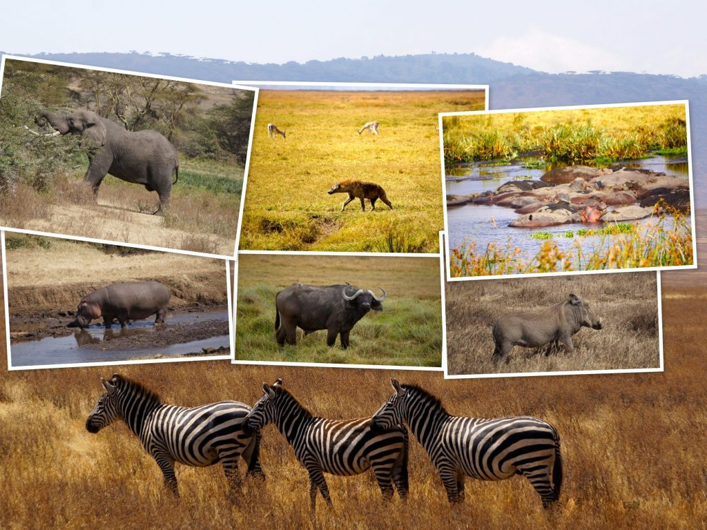 wildlife during Ngorogoro Crater safari including elephant, buffalo, hyena, zebra, hippos, and warthog