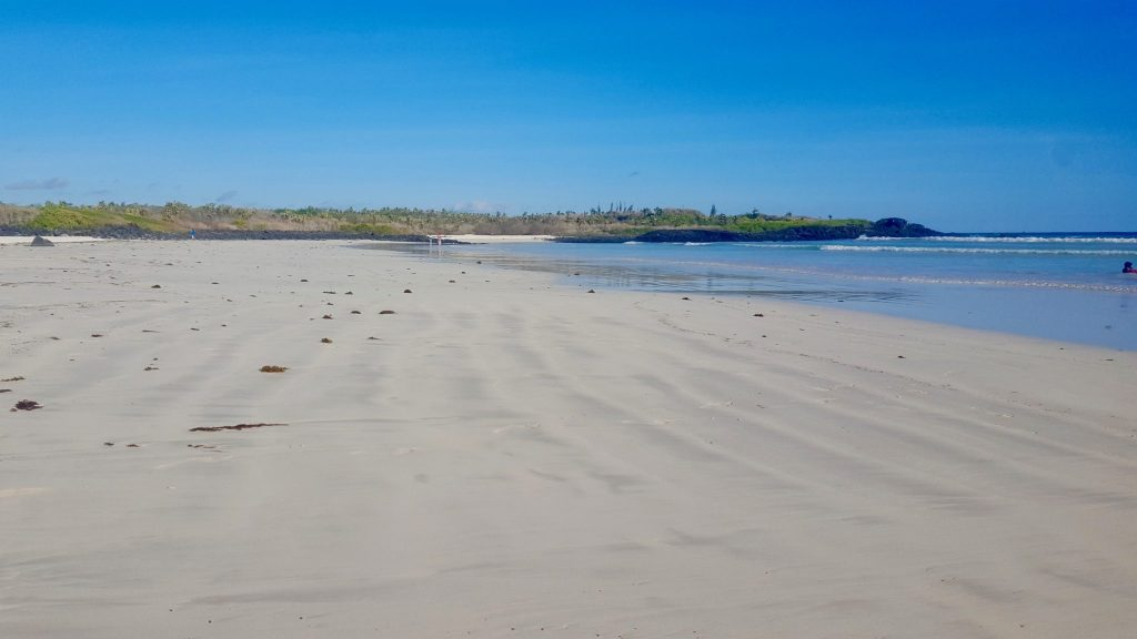 Tortuga Bay beach is a beach you can walk to for free within Galapagos National Park on Santa Cruz Island