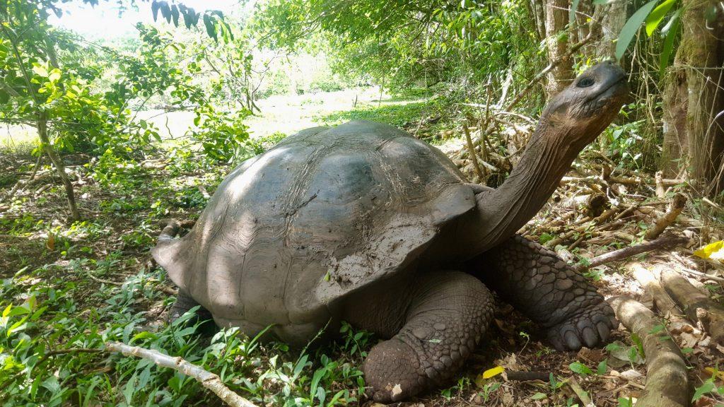 free tortoise breeding center galapagos