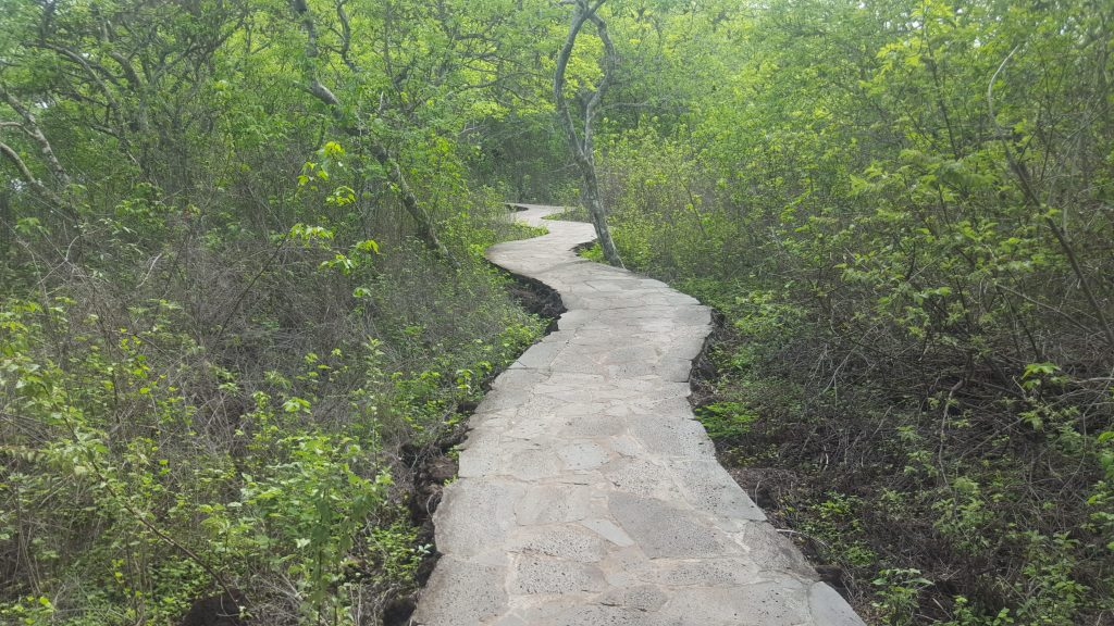 Cerro Tijeretas trail on San Cristobal is a free hiking trail in the Galapagos