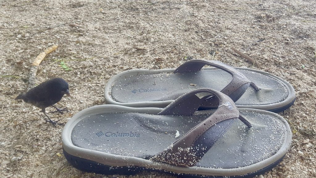 Columbia Athletic Sandals on a free Galapagos beach