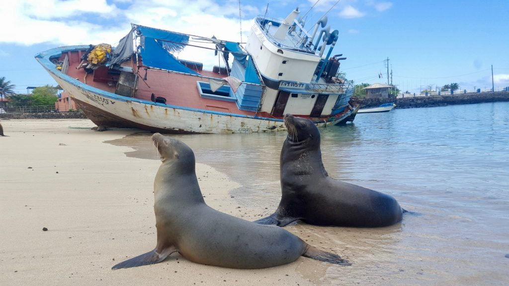 sea lions in front of shipwreck in the Galapagos