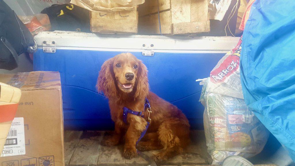 dog on Napo River boat from Coca to Nuevo Rocafuerte