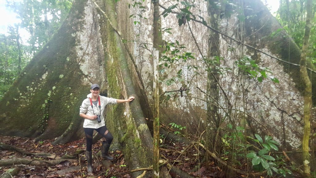 Big tree in jungle of Yasuni National Park