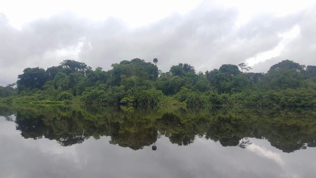Yasuni National Park calm water reflecting the jungle trees