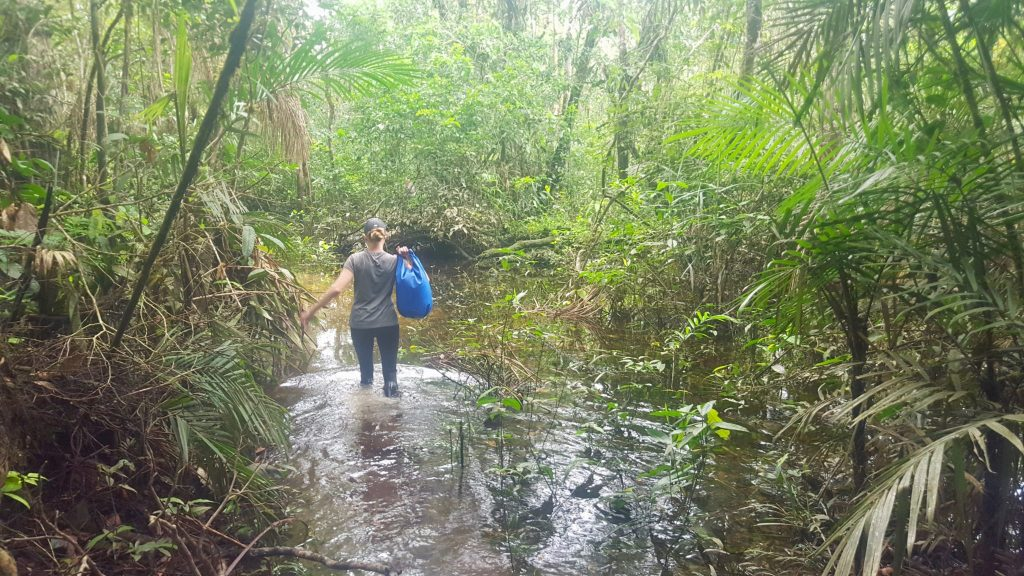 Trekking in the water of Yasuni National Park jungle / rain forest hike