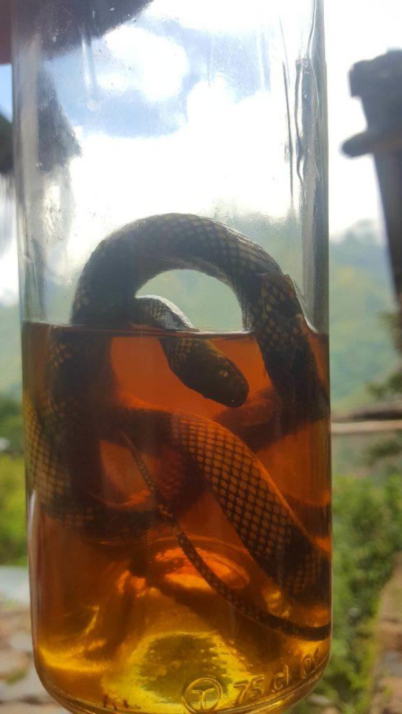 Inca Tequila snake liquor in Peru