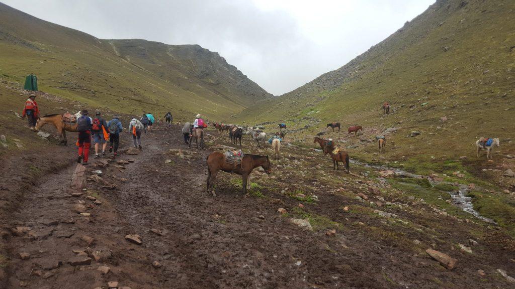 Horses at Rainbow Mountain Peru