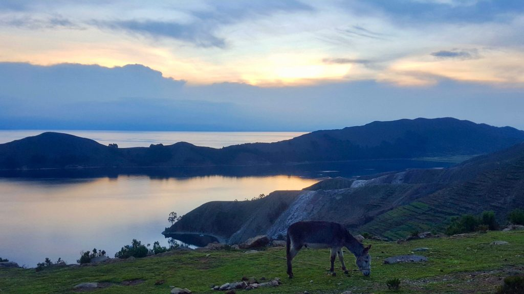 Isla del Sol Bolivia sunset with donkey and Lake Titicaca