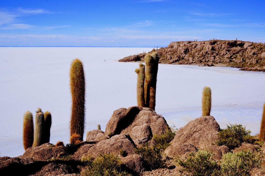 "Incahuasi: The ""Fish Island"" during Bolivia Salt Flat Tour in Salar de Uyuni"