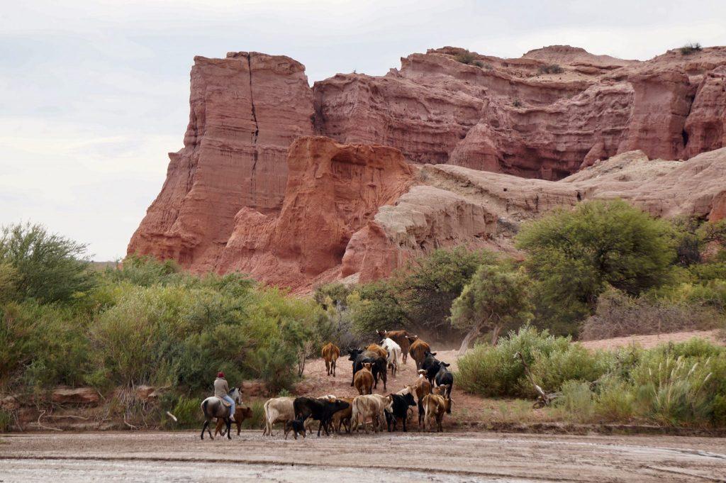Guacho (cowboy) near cafayate Argentina